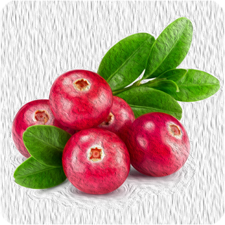 Cranberry 10 ml Aroma
