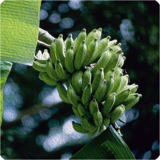 Banane 10 ml Aroma