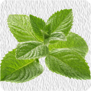 Pfefferminze 10 ml Aroma